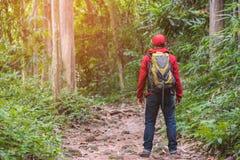 Tillbaka sida av handelsresandemannen i skog som fotvandrar semestrar f?r sommar f?r aff?rsf?retag f?r lopplivsstilbegrepp utomhu royaltyfri foto