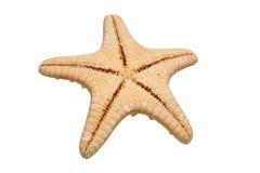 Tillbaka sida av sjöstjärnan som isoleras på vit bakgrund arkivfoton
