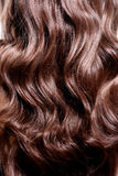 Tillbaka sikt av brunettkvinnan med långt svart lockigt hår arkivbilder