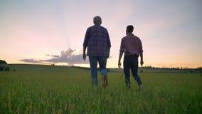 Tillbaka sikt av den gamla fadern som talar med hans vuxna son och tillsammans går på vetefältet, härlig solnedgång i bakgrund stock video