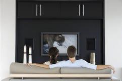 Tillbaka sikt av den hållande ögonen på djurlivfilmen för par på television i vardagsrum Royaltyfri Foto