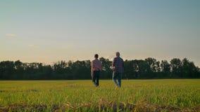 Tillbaka sikt av den vuxna sonen och gamla fadern som bort går på sugrörfält under skördsäsongen, härlig sikt av naturen under stock video