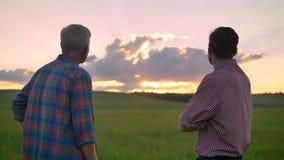 Tillbaka sikt av det gamla faderanseendet samman med vuxen son och hållande ögonen på solnedgång och att stå på vete- eller rågfä stock video