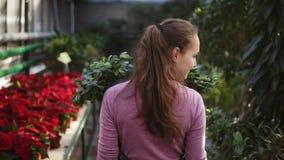 Tillbaka sikt av en ung kvinnlig blomsterhandlare med hästsvansen i förkläde som går bland rader av blommor i blomsterhandel elle stock video
