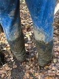 Tillbaka sikt av jeans som täckas i gyttja Arkivfoton