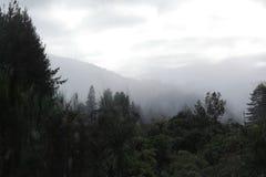 Tillbaka skog och kall dimma royaltyfri bild