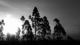 Tillbaka vit för solnedgång Royaltyfri Fotografi