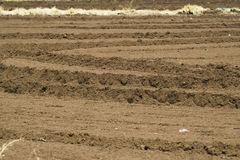 Tilled farm field Stock Photography