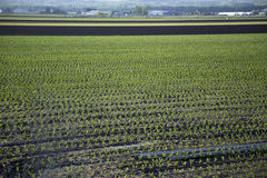 Tilled Farm Field with Crop Stock Image