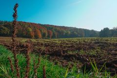 Tilled Field in Autumn with Plants and grass in the foreground. A tilled field with vibrant autumn trees in the background and a blue sky. Photo taken in Royalty Free Stock Images