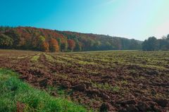 Tilled Field in Autumn with Plants and grass in the foreground. A tilled field with vibrant autumn trees in the background and a blue sky. Photo taken in Royalty Free Stock Photos