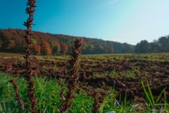 Tilled Field in Autumn with Plants and grass in the foreground. A tilled field with vibrant autumn trees in the background and a blue sky. Photo taken in Stock Photo