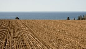 Tilled field by the ocean Stock Photography