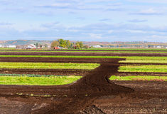 Tilled fields. In Holland Marsh in Ontario Stock Photos