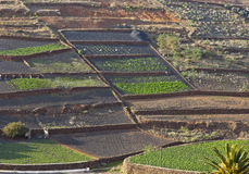Tilled fields in rural hilly area in Lanzarote Stock Photography