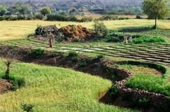 Tilled lands, India Royalty Free Stock Photography