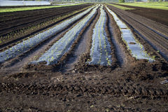 Tilled Soil on Farm Stock Photos