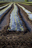 Tilled Soil on Farm Royalty Free Stock Image