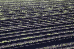Tilled Soil on Farm Stock Images