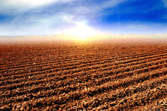 Tilled soil after harvest. And preparing the land for cultivating Royalty Free Stock Photo