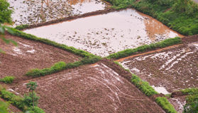 Tiller in rice field. In thailand Royalty Free Stock Images