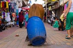 Tillfällig brun ko som söker efter mat i fullsatt gata i Indien Fotografering för Bildbyråer