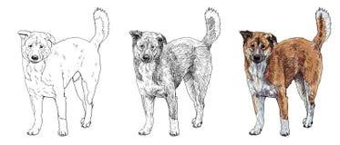 Tillfällig hund stock illustrationer