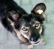 Tillfällig hund Royaltyfri Foto