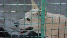 Tillfällig hund eller övergiven hund i bur arkivfilmer