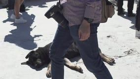 Tillfällig hund för akropol lager videofilmer