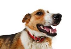 Tillfällig hund för byracka royaltyfri fotografi