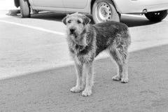 Tillfällig hund i parkeringsplatsen arkivfoton