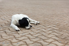 Tillfällig hund på gatorna Arkivbilder