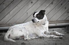 Tillfällig hund som ligger på grusvägen Arkivbild