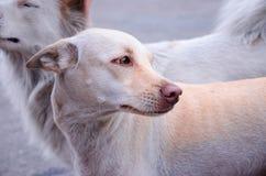 Tillfällig hund som ser till rätten Arkivbilder