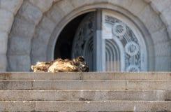Tillfällig hund som tycker om den varma sommaren Arkivfoto