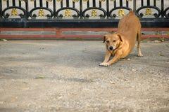 Tillfällig hund som vilar på jordningen Royaltyfri Bild