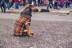Tillfällig hundkapplöpning Royaltyfria Foton