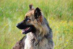 Tillfällig hundkapplöpning Royaltyfria Bilder