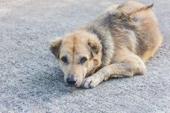 Tillfällig hundkapplöpning som sover på gatan Arkivfoton