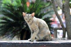 Tillfällig katt Arkivfoto