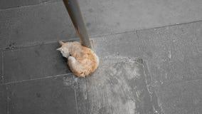 Tillfällig katt royaltyfria foton