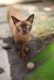 Tillfällig katt Royaltyfria Bilder