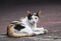 Tillfällig katt Fotografering för Bildbyråer
