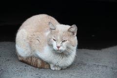 Tillfällig katt Arkivfoton
