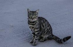 Tillfällig katt Royaltyfri Fotografi