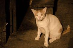 Tillfällig katt i bakgata royaltyfri foto
