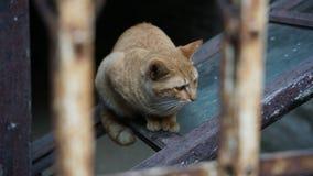 Tillfällig katt med ensamt uttryck arkivbilder