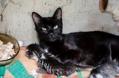 Tillfällig katt med kattungar Arkivbild