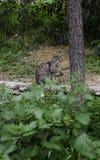 Tillfällig katt på en parkera av Aten - Grekland arkivbilder